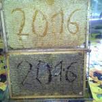 20160530_180418 - Kopia