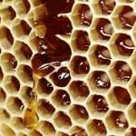 spadziowo- nektarowy