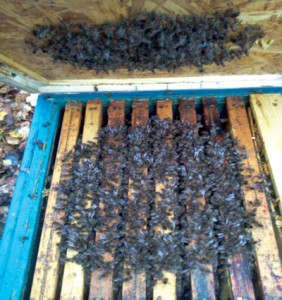 Pszczoły w Grudniu